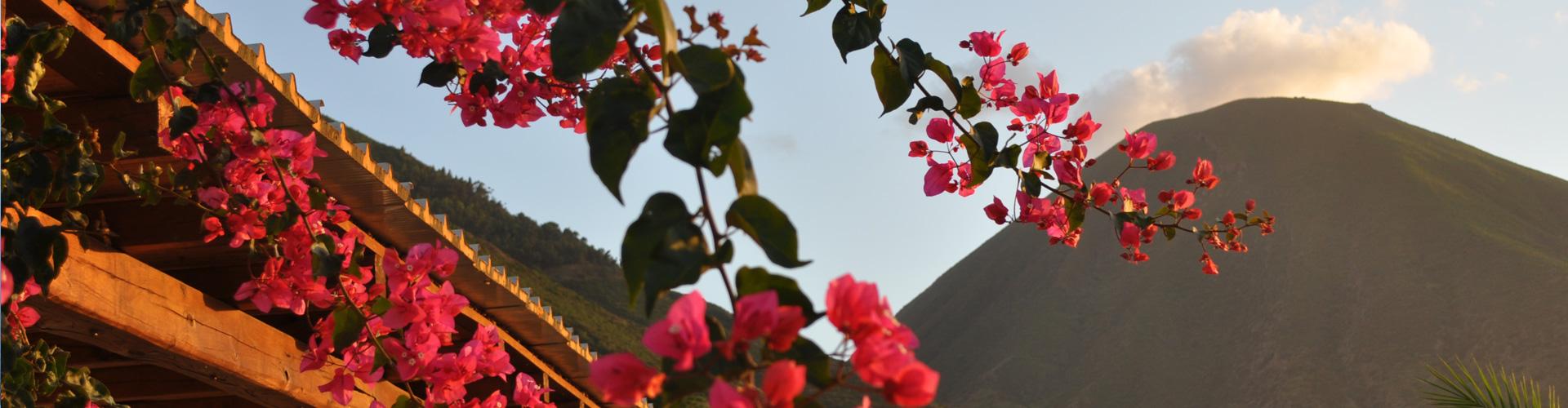 5 fiori